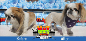 Mobile Doggy Salon in Rivonia & Kyalami