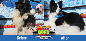 What is mobile dog grooming?