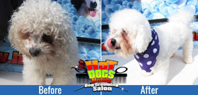 Benefitting from Mobile Dog Grooming in the West Rand