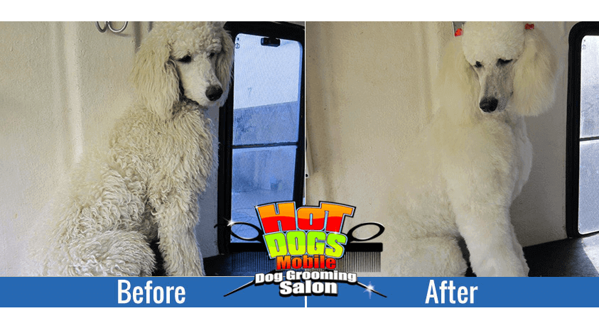 poodle-before-after