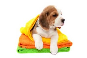 Mobile Dog grooming in Bryanston and Fourways