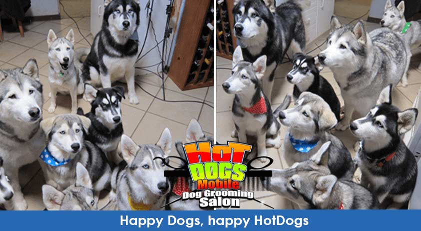 happy-dogs-happy-hotdogs