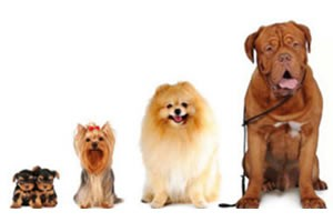 Mobile dog bather and cleaners in Johannesburg