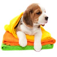 What are the benefits of mobile dog grooming?