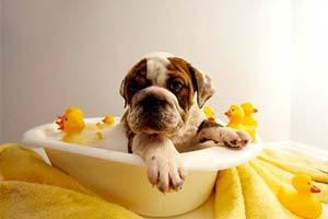 Dog Salon – HotDogs Mobile Dog Grooming Salon