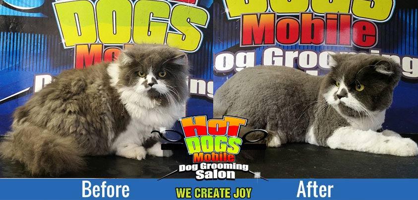 cats-grooming-hotdogs